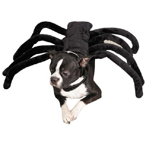 Spider Costume for Dog - hilarious scare potential - http://halloweenfunshoppe.com/spider-costume-for-dog/
