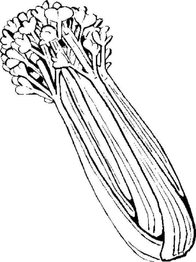 Ausmalbilder Ausmalbilder Sellerie Zum Ausdrucken Kostenlos Fur Vegetable Coloring Pages Sketch Notes Clip Art Library