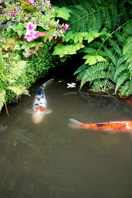 110 best images about pretty things on pinterest circus for Japanese garden with koi pond