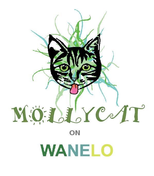 See Mollycat products on Wanelo, the world's biggest shopping mall! #shop #wanelo #mollycat #fashion #goods #cats #kitten #shoppingnow #mall #online,