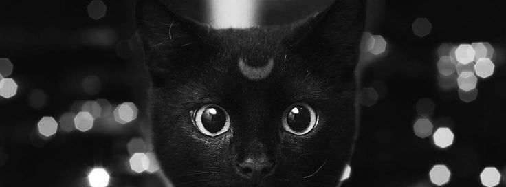 Luna Sailor Moon cat wallpaper hipster cover facebook