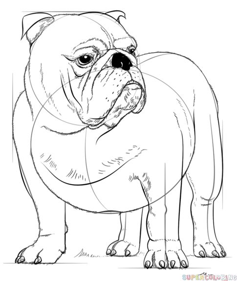 seeing eye dog coloring pages | 844 best Draw This WARM UPS images on Pinterest | Drawings ...