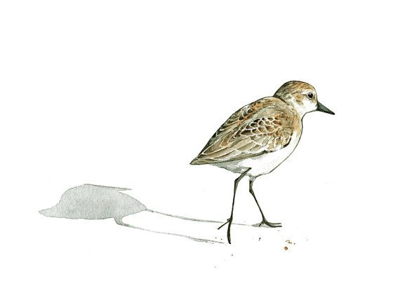 Sandpiper Print Beach Bird Watercolor Painting by studiotuesday
