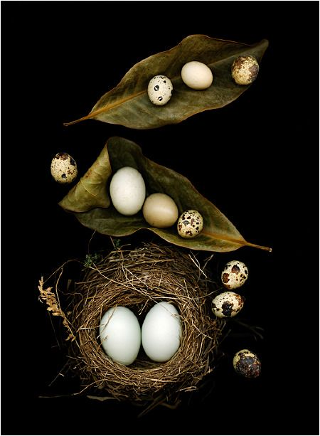 Nesting, Still Life, Scanner Photography, By Ellen Hoverkamp - Scanner Photography By Ellen Hoverkamp