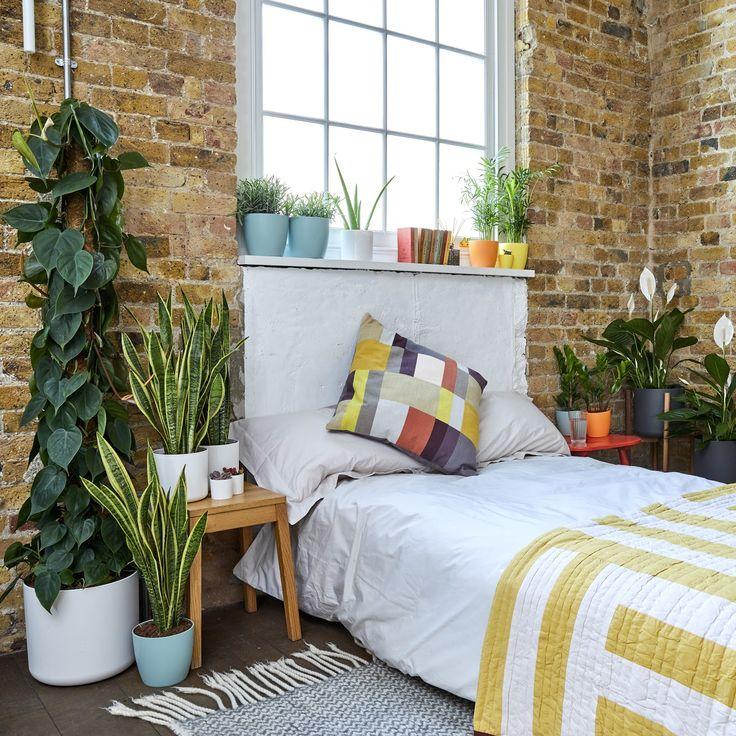 10 Best The Best Bedroom Plants Images On Pinterest 400 x 300