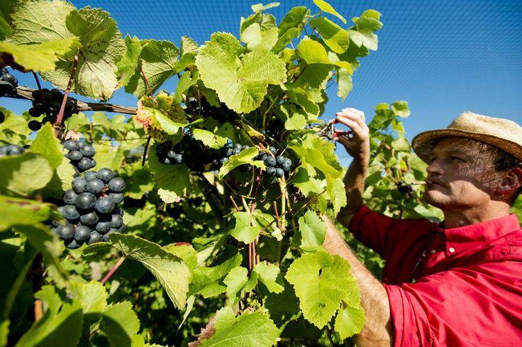 Na drie jaar bakkeleien is Europa het eens over nieuwe regels voor biologische landbouw. Boer en consument moeten daar baat bij hebben.