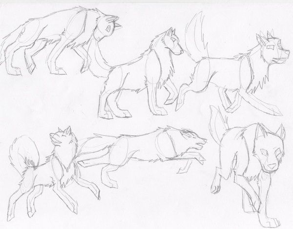 wolf front poses - HD2693×2103