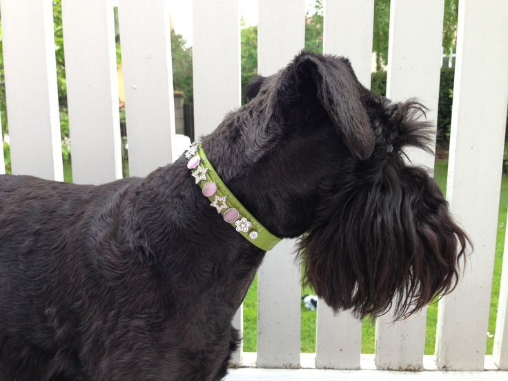 Tulle wearing one of the Spring & Summer Collection Collars.