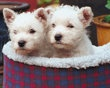 Top 10 Puppy Names of 2012 | Photo Gallery - Yahoo! Shine