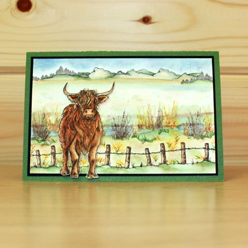 CS120D 'Highland Cattle' Clear set contains 12 stamps designed by the very talented Sharon Bennett for Hobby Art Stamps. Card by Franka Benjaminsen