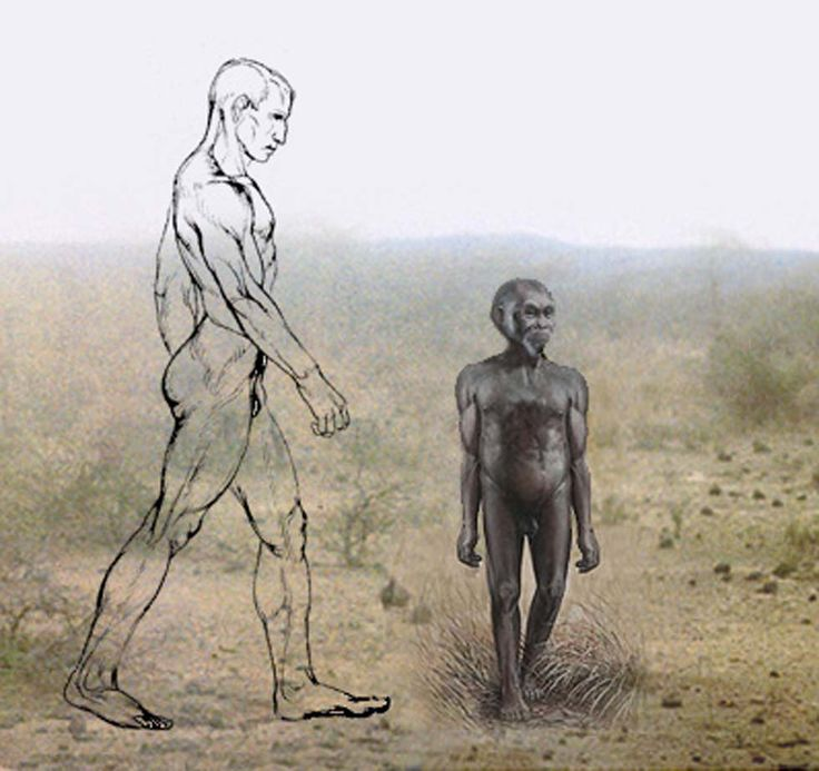 "The height of Homo floresiensis (3ft 6in) compared with modern humans, Homo sapiens (6ft). It has been confirmed that Homo floresiensis is a genuine ancient human species and not a descendant of healthy humans dwarfed by disease. Using statistical analysis on skeletal remains of a well-preserved female specimen, researchers in several different labs have determined that the ""hobbit"" is definitely a distinct species of human and not a genetically flawed version. of modern humans."
