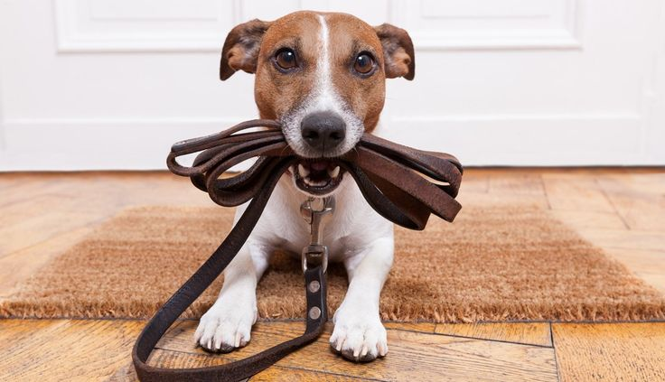 From Crazy To Calm: A Training Plan For Leash Reactivity – Dr. Jen's Dog Blog