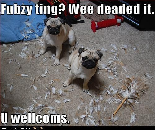 135 best i luv pugs images on Pinterest | Doggies, Funny ...