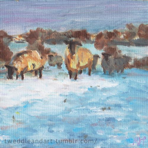 Sheep in the morning snow painted in the Tees valley.