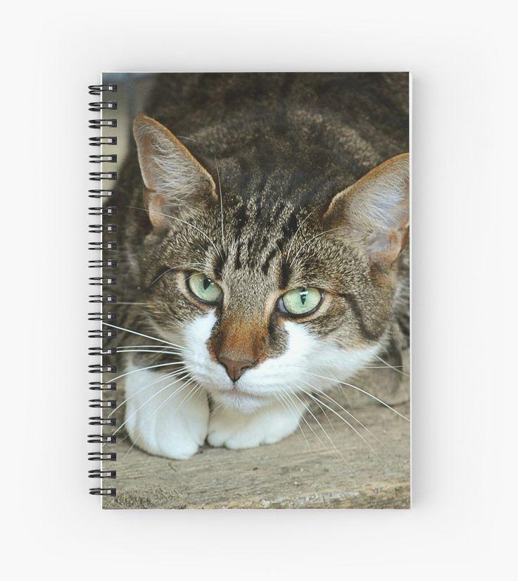 kitty kitty kitty spiral notebooks http://ift.tt/2AhwaNP