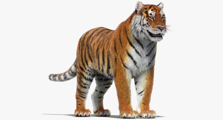 3D Tiger Fur - 3D Model