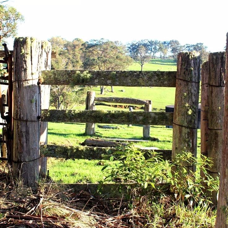 Fences upon fences.  Tenterfield, NSW.
