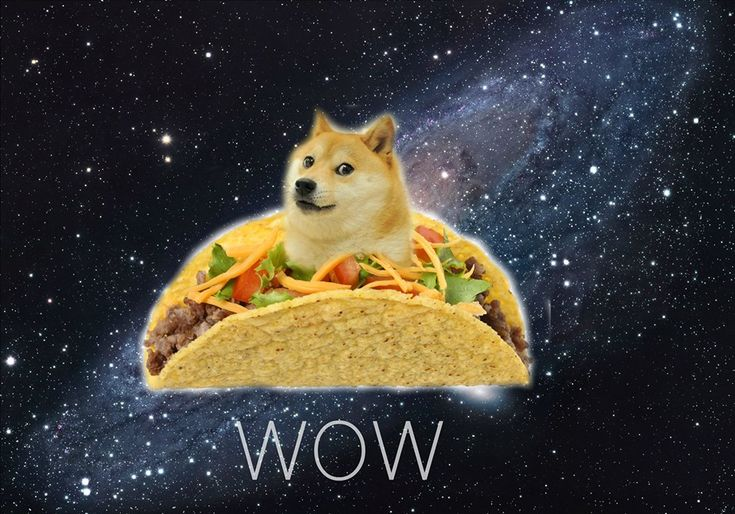wow what is happening to doge? wow doge is flying with ...