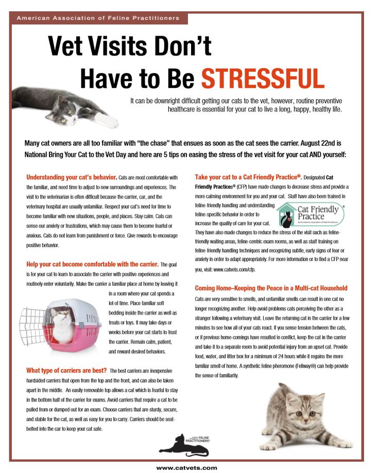 reducing cat stress during veterinary visits - 736×920