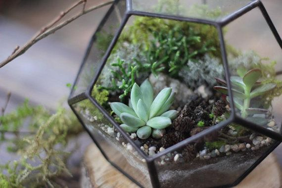 Dodecahedron Geometric Terrarium Classic geometric form - Dodecahedron have 12 faces. One face is opened for easy access to your original succulent greenery and air circulation.  The Dodecahedron is great for indoor succulent plants cultivation, minimalistic interior accessory and as wedding decor or a candle holder. #dodecahedron #florarium #флорариум #stereometricdesign #geometric #succulents #cactus #minigarden #terrarium #plants #airplant #glasswork #diy #handcraft #homeinterior