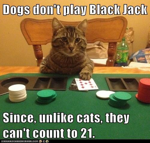 Card sharp kitteh belongs to the MIT blackjack team
