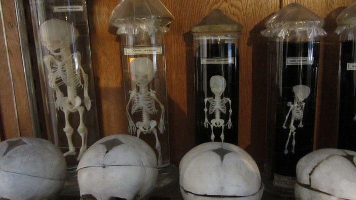 Hrdlička Museum of Anthropology | Atlas Obscura