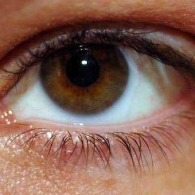 De bruine iris
