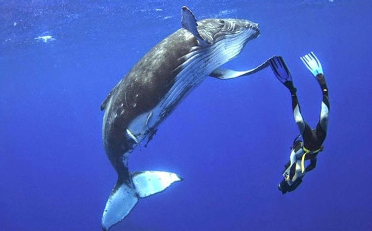 Close Encounter With a Sleeping Humpback Whale ~ Viral Stories