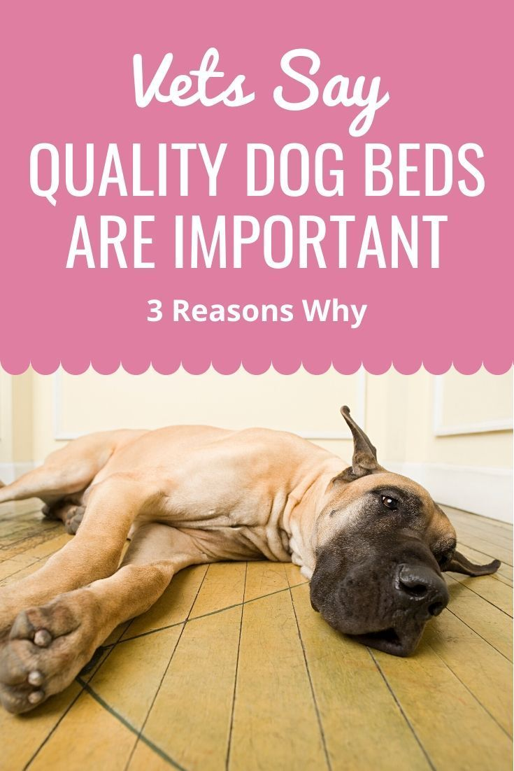 Dog Beds For Great Danes Great Dane Cool Dog Beds Dane