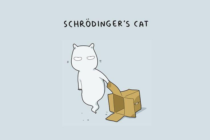 12 types de chats par Lingvistov  Dessein de dessin