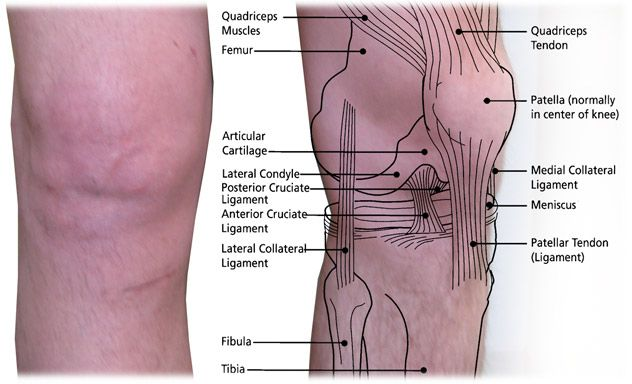 acl surgery parts of the knee | knee surgery | pinterest | new, Human Body