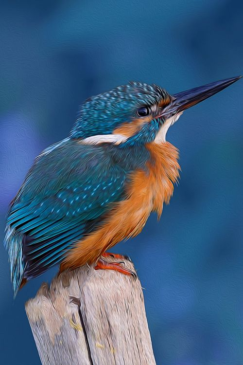 """Kingfisher """"When I'm Feeling Blue"""" - ©Gray Clements (via 500px)"""