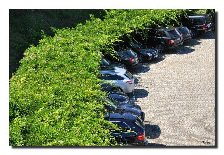 Parking arboré. Ombre. Arbre taille architecturée. Tonnelle.