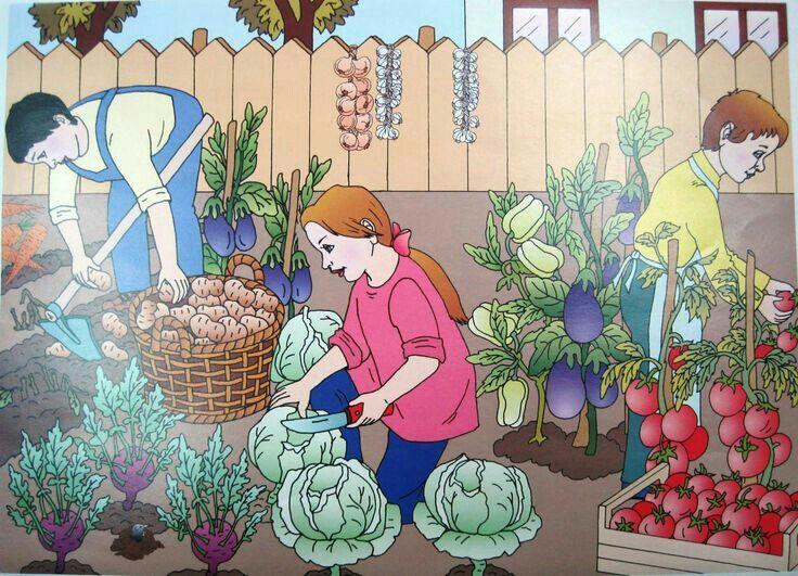 сюжетные картинки овощи ушевая кабина, топление