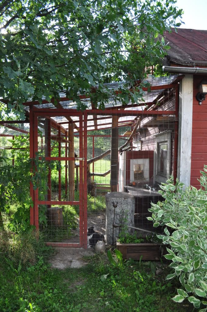 A simply built great cat run that looks highly doable:) #cats #CatRun #catio