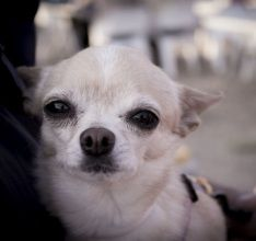 Getty Images Competitions | Competitions | Work With Us | Submissions | Perro Chiguagua