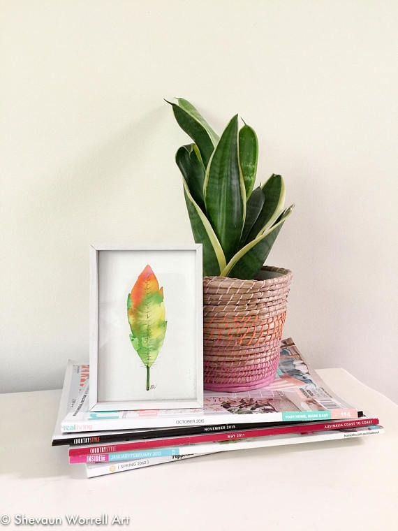 Watercolour feather. Original painting in white frame.