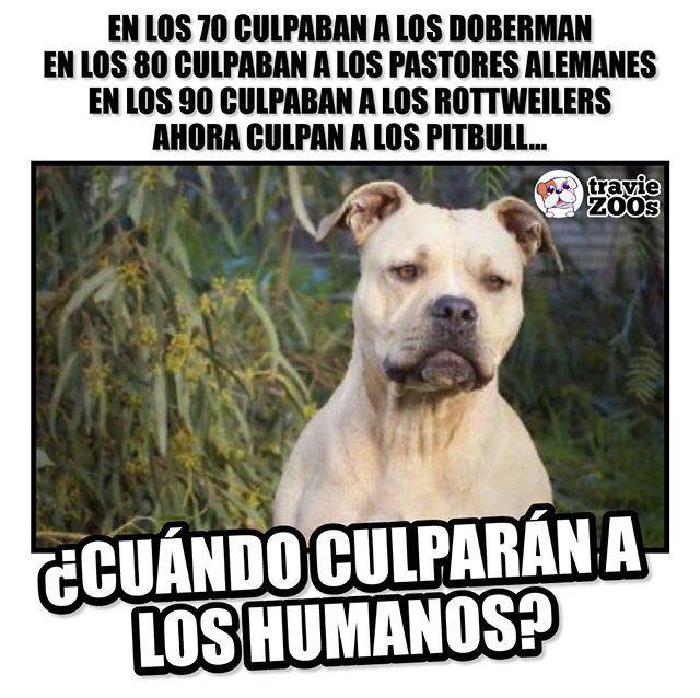 Ya Basta De Caer En Las Mentiras De La Ignorancia Los Pitbull No Son Una Raza Agresiva Perros Frases Animales Frases Perros Fuertes