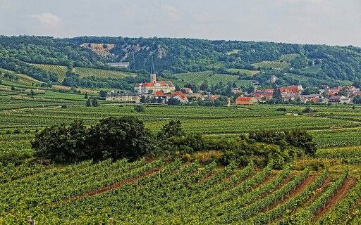 Traiskirchen Lower-Austria - in the wine country