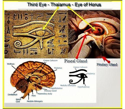 third-eye-pineal-gland