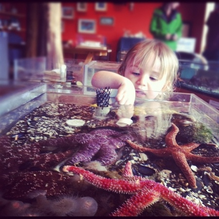 We are very excited that the Ucluelet Aquarium will be reopening on March 17th. A fantastic visit for children young and old, and a great way to support local marine conservation.