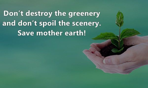 40 Eye-Opening Slogans On Save Trees - Natureaxis