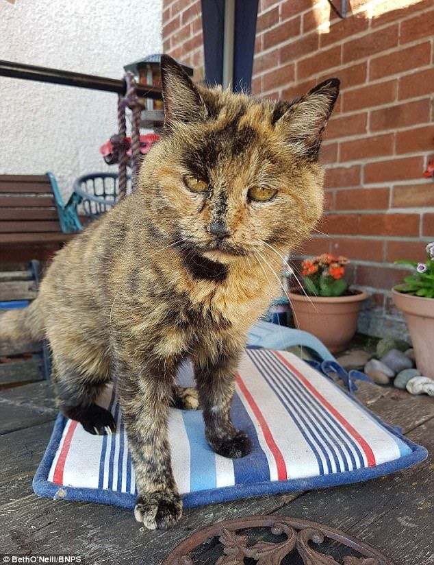 IS THIS THE WORLD'S OLDEST CAT? TABBY HAS A LIFE-SAVING OPERATION AT THE GRAND AGE OF 31
