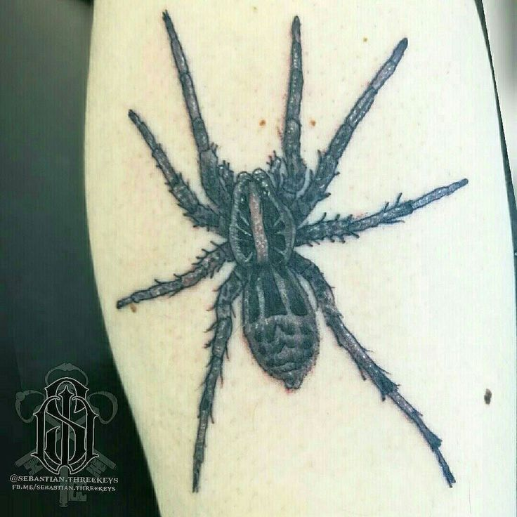 Another spider for spiderman here @lincolninktattoostudio Nice wee wolf spider this time :o  #s8stencilproducts #s8tattoo #s8tattoostencil #blueanchorstencilcreme #worldfamousink #worldfamousinks #ringmasterirons #dynamicblackink #lincolninktattoo #lincolninkchristchurch #lincolninktattoostudio  #spidertattoo #spidertattoos #blackworktattoo #blackandgreytattoo #blackandgreytattoos #calftattoo #calftattoos