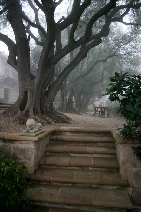 Steps and mist