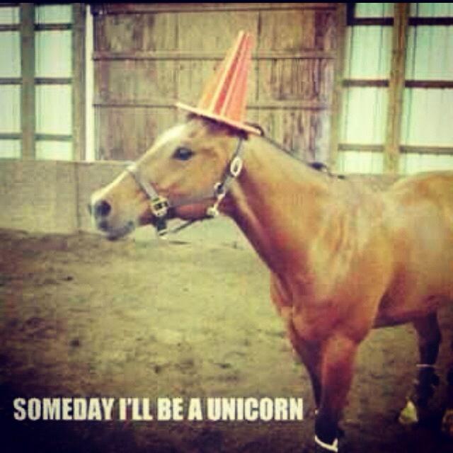 Someday!: Animals, Horses, Dream, Funny Stuff, Funnies, Unicorns