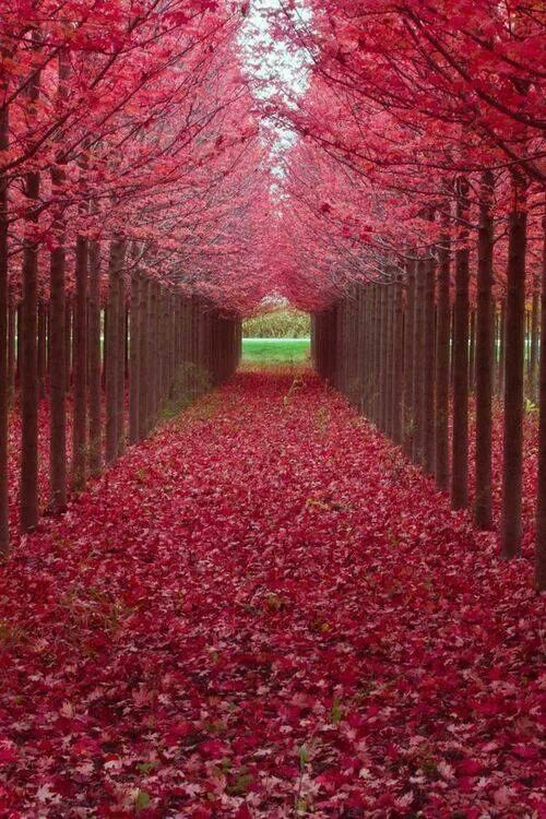 .un hermoso callejon
