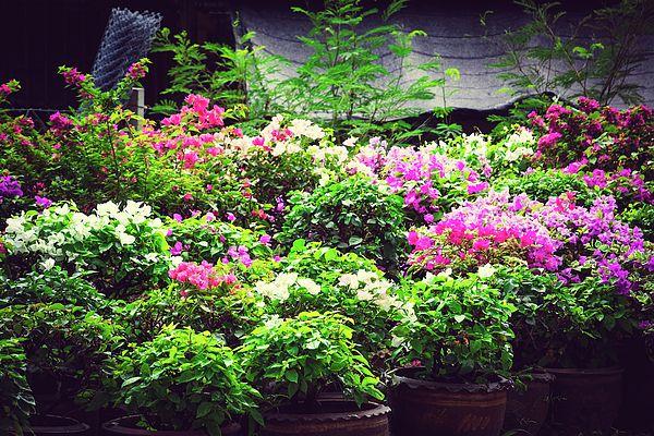 Flowers In The Beautiful Garden Photograph by Nadezhda Tikhaia   #NadezhdaTikhaiaFineArtPhotography #ArtForHome #HomeDecor #Flowers #InteriorDesign #FineArtPrints