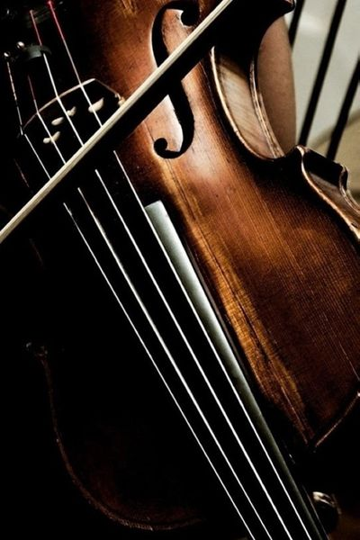 ♫♪ Musical ♪♫ instrument brown - the violin, instruments of music.