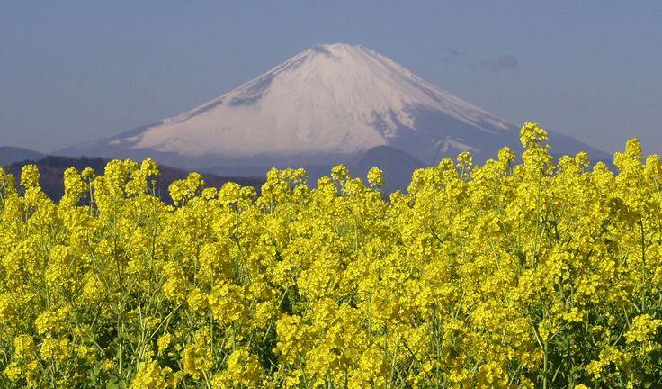 Qué ver y hacer en Tohoku: Fukushima (mucho más que centrales nucleares, no os lo perdáis)